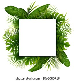 Tropical green leaves with white square frame place for text isolated on white background