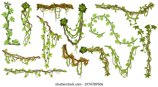 Tropical hanging vines. Jungle liana climbing plants, wild rainforest vines branches with leaves isolated vector illustration set. Liana exotic branches foliage to limbing, branch rainforest greenery