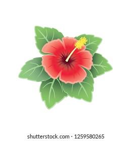 Tropical hibiscus flower illustration logo with realistic shading. Hawaiian logo or symbol.