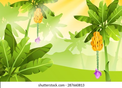 Tropical jungle banana tree with fruits. Isolated vector illustration.