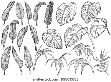 Tropical jungle leaves set