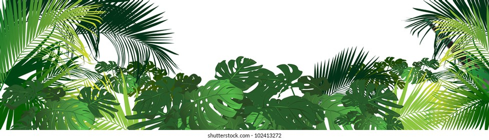 tropical landscape (tropical plants a vector drawing)