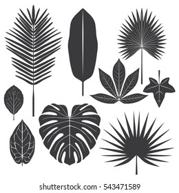 tropical leaf elements set, vector illustrated, black and white