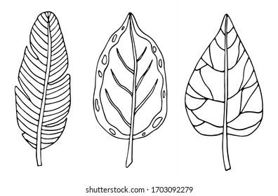 Tropical leaf line art. Hand drawing doodles leaf vector illustration. Minimalism art. Botanical modern decor.