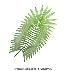 Tropical leaf palm isolated. Vector illustration. EPS 10