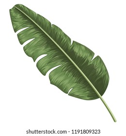 Tropical leaf palm isolated. Watercolor. Vector illustration. EPS 10