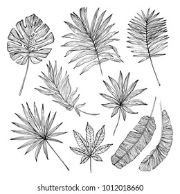 Tropical Leaves Line Drawing Images Stock Photos Vectors Shutterstock Tropical leaves stock photos tropical leaves stock illustrations. https www shutterstock com image vector tropical leaf silhouette elements set isolated 1012018660