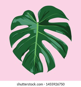 Tropical Leaf Vector Illustration - Tropical Monstera deliciosa leaf vector illustration in a flat, paint by numbers style.