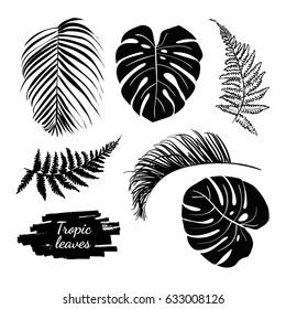 Tropical leaves collection set. Decorative plant elements from the jungle isolated on the white background.