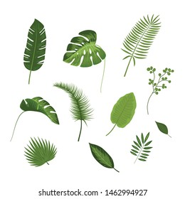 Tropical leaves collection. Vector Illustration isolated on white background.