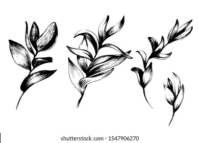 Tropical leaves from different angles, home green plants, palm tree. manual graphics. Botanical flower, pencil, floral element for textile decoration and wallpaper. isolated stock graphics