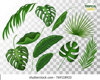 Tropical leaves, exotic fern, palm, mostrela in realistic style set. Summer holiday, vacation floral nature objects. Vector illustration on light grey transparent background.