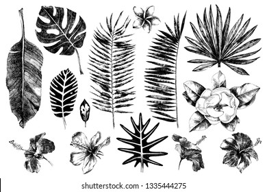 Tropical leaves and flowers collection. 14 hand drawn unique elements. Vector illustration