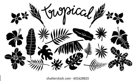 Tropical leaves, flowers set. Plants isolated on white background