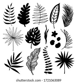 Tropical Leaves Graphic Set. Hand drawn sketches of leaves of tropical trees. Vector illustration.