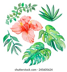 Tropical leaves isolated on white background. Tropical plants: exotic flower hibiscus and leaves. Vector.