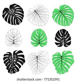 Tropical leaves of Monstera Deliciosa. Summer vector illustration