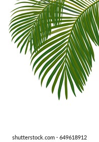 Tropical leaves of palm tree. Isolated on white background.
