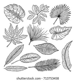 Tropical Leaves Line Drawing Images Stock Photos Vectors Shutterstock Illustrations are drawn by hand and vectorized. https www shutterstock com image vector tropical leaves plants vector hand drawing 713753458