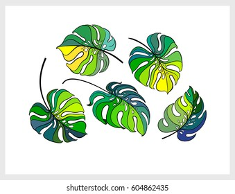 Tropical leaves set. Monstera leaf. Swiss cheese plant. Jungle design elements set isolated on white background. Vector illustration for print.