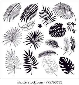 tropical leaves silhouette