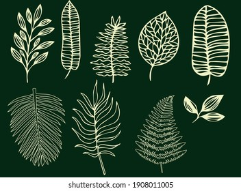 Tropical leaves of various shapes. Pointed Leaves Isolated Background Drawing Linear Only Outline Vector graphics