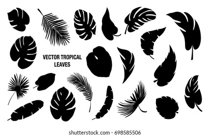 Tropical  Leaves vector set created in flat style on white background.Vector tropical leaves  silhouette on white background.