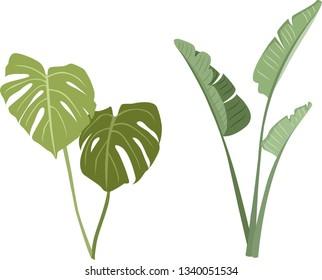 Tropical leaves vector set. Monstera leaves and banana leaves