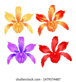 Tropical Orchid flower Cattleya type hybrid orchid with peach colored yellow red purple set  on white background vintage vector illustration editable hand draw