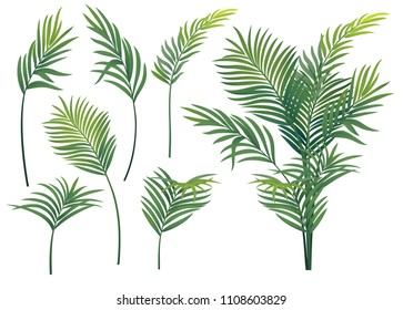 Tropical palm with tropical leaves
