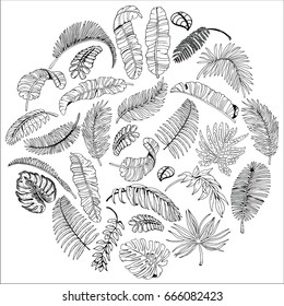 Tropical Palm Leaves in Circle. Exotic Leaf Background. Hand Drawn Black and White illustration.