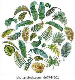 Tropical Palm Leaves in Circle. Exotic Leaf Background. Hand Drawn illustration.