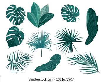 Tropical palm leaves, jungle leaves, botanical vector illustration, set isolated on white background.