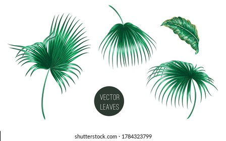 Tropical palm leaves, jungle leaf set isolated on white background. Summer vector illustrations. Hand drawn green elements. Floral clip art. Exotic botanical print.