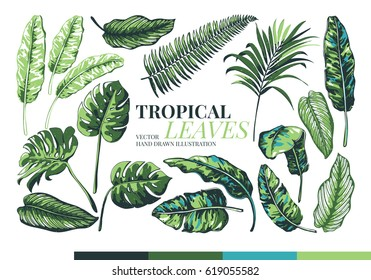 Tropical palm leaves and  jungle leaves. Set of vector trendy illustrations isolated on white background.