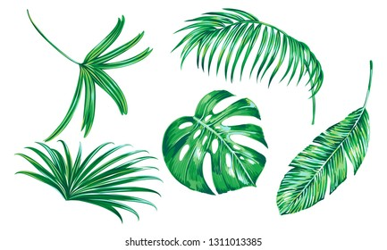 Tropical palm leaves, monstera, banana leaf, jungle set isolated on white background. Vector green botanical illustrations, hand drawn floral elements, plants collection