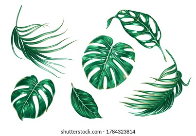 Tropical palm leaves, monstera, green foliage, jungle leaf set isolated on white background. Summer vector illustrations. Hand drawn green elements. Floral clip art. Exotic botanical print.