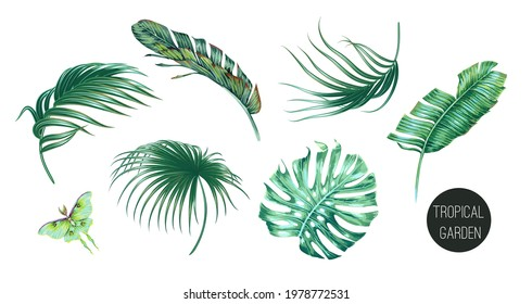 Tropical palm leaves, monstera, green foliage, jungle leaf set isolated on white background. Summer illustrations. Hand drawn green elements. Floral clip art. Exotic botanical print. Vector.