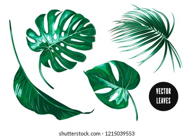Tropical palm leaves, monstera, jungle leaf set isolated on white background. Botanical exotic vector illustrations, green foliage, hand drawn floral elements