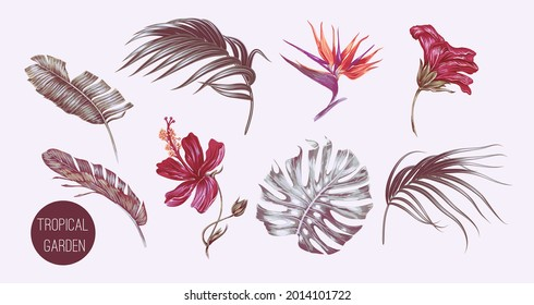 Tropical palm leaves, monstera, jungle leaf, exotic flowers, hibiscus, bird of paradise flower set isolated. Summer illustrations. Hand drawn elements. Floral clip art. Vintage botanical print. Vector