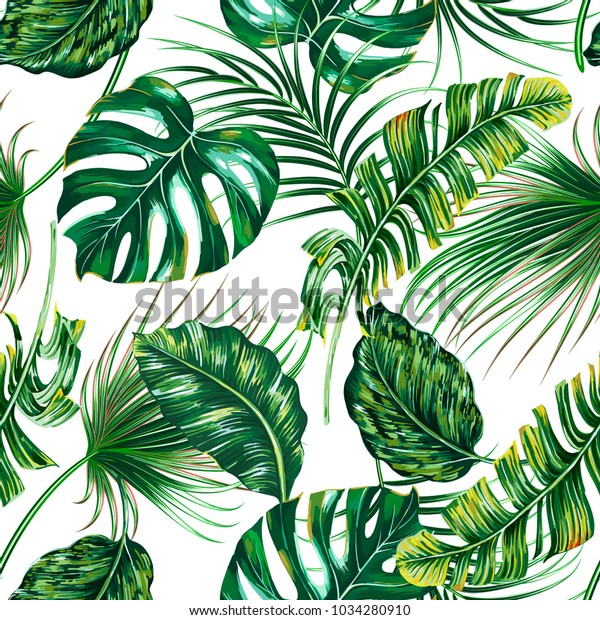 Tropical Palm Leaves Monstera Jungle Leaf Stock Vector Royalty Free 1034280910 Tropical palm tree leaves background. https www shutterstock com image vector tropical palm leaves monstera jungle leaf 1034280910