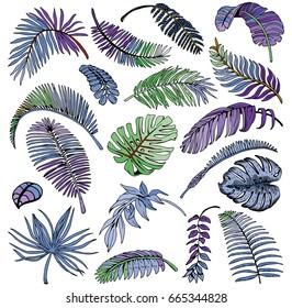Tropical Palm Leaves Set. Exotic Leaf Background. Hand Drawn illustration.