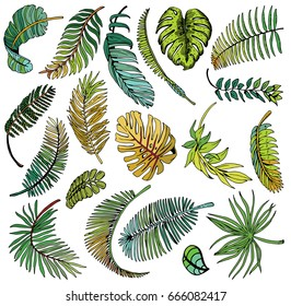 Tropical Palm Leaves Set. Exotic Leaf Background. Hand Drawn illustration.