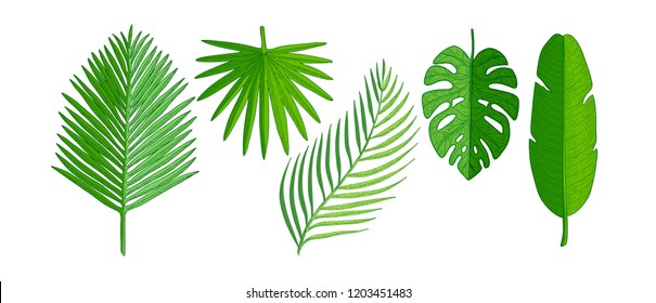 Tropical palm leaves set. Hand drawn plants vector illustration isolated on white background.