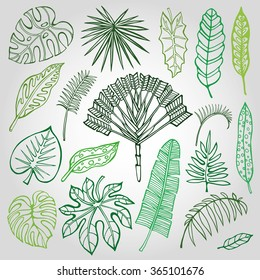 Tropical Leaves Drawings Hd Stock Images Shutterstock With this file you will be able to create awesome and unique greeting cards, invitations, logos, posters, wedding designs, scrapbooking design and any type of designs with cute hand drawn tropical leaves. https www shutterstock com image vector tropical palm leaves set leafoutline drawing 365101676