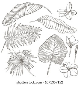 Tropical palm leaves. Vector illustration. Engraved jungle leaves.