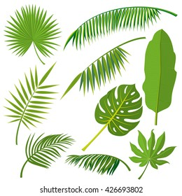 Tropical palm tree jungle leaves vector set. Leaf natural of jungle, green exotic leaves branch illustration