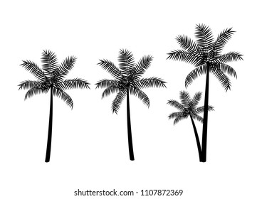 Tropical palm trees, black silhouettes isolated on white background. Vector