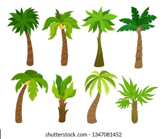 Tropical palm trees set, beach and nature concept. Bright tropical decoration. Vector flat style cartoon palm illustration isolated on white background