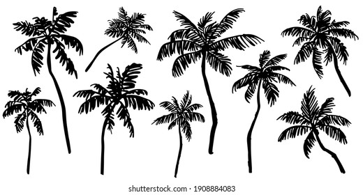 Tropical palm trees sketch set. Realistic black silhouettes of palm trees isolated on white  background. Vector illustration